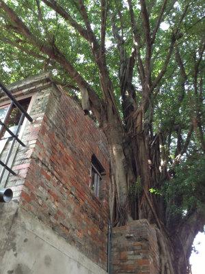 老街と自然のコラボ。